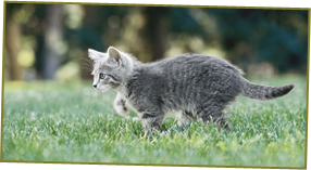 Cat Care - Milton Keynes, Buckinghamshire - Villiers Farm Kennels & Cattery - Cat running