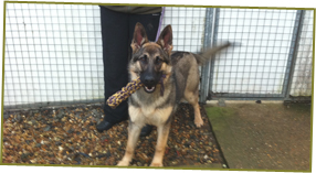 Cat Boarding - Milton Keynes, Buckinghamshire - Villiers Farm Kennels & Cattery - Dog Kennels