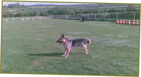 One-to-One Dog Training - Milton Keynes, Buckinghamshire - Villiers Farm Kennels & Cattery - Dog Training